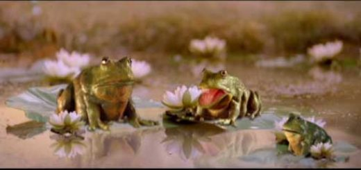 ROBBIE_WILLIAMS_Frogs