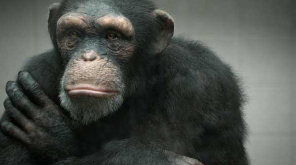 PETA 99% Human ( visit www.greatapepledge.org )