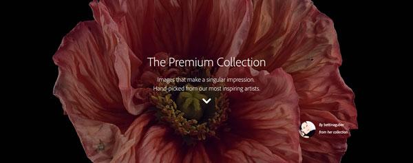 Premium-stock
