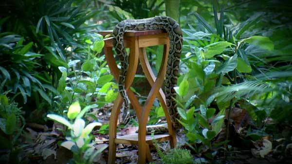 snakestool