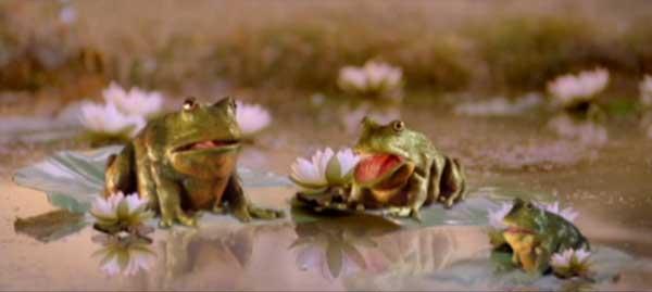 FrogsFriends
